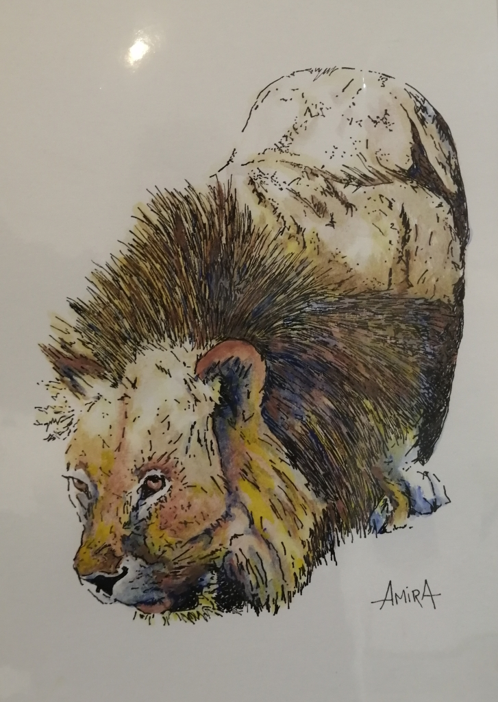 """""""Thirsty Lion"""" by Antoinette Coetzee, Ink & watercolor on paper, mounted, 210×297 mm = R1050"""