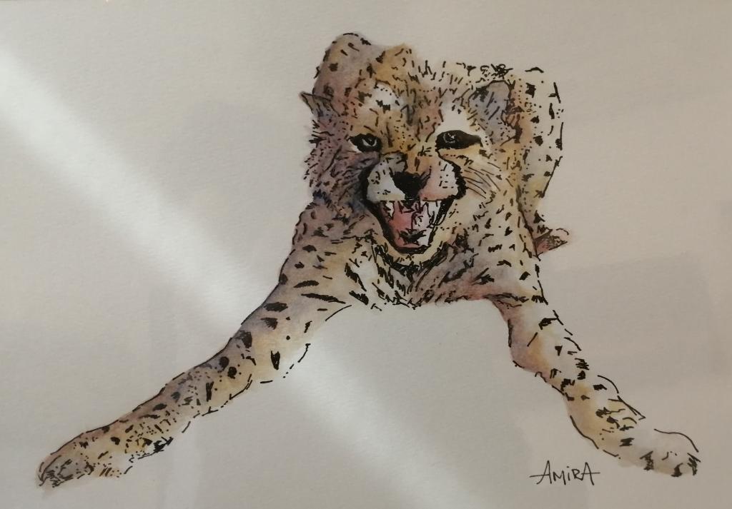 """""""Cheetah cub"""" by Antoinette Coetzee, Ink & watercolor on paper, mounted, 210×297 mm = R1050"""