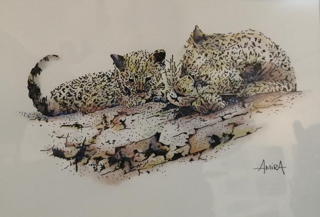 """Leopard & cub"" by Antoinette Coetzee, Ink & watercolor on paper, mounted, 210×297 mm = R1050"