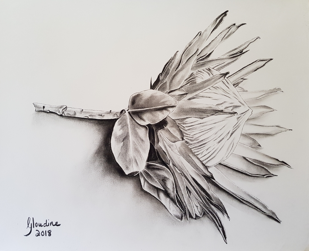 """""""Protea"""" by Gloudine Kriel, Charcoal on Fabriano Paper, 500x400 mm, Framed - Sold"""